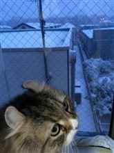 カバだるまの雪下ろし