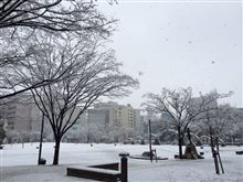 雪かきとリコール