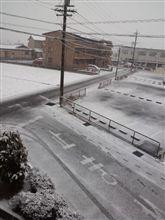 雪と桜とゴディバとイチゴ( ̄▽ ̄)