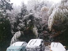 また雪が降りました(>_<)