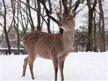 雪の奈良公園