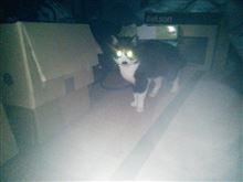 ネコの日( ´ω`)y─┛