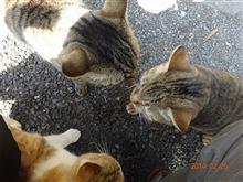 犬猫の殺処分と母親のホーム