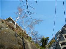 pm2.5 東京は影響なし・・・