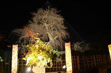 京都観光案内?