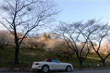春はもうちょっと(城山)!?
