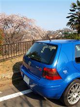 近所~枝垂桜咲きました