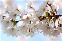 春ですね(^-^)