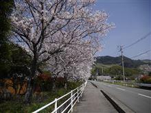 練習撮影:桜