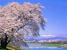 花より走行会!まだまだ間に合う!4月1日SUGO春の大走行会^^!