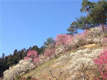梅と桜咲く