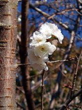 みんカラ春の新商品プレゼントまつり2014【CELLSTAR】