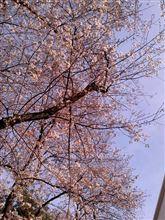 春のお仕事