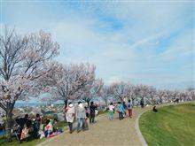 狭山池 大阪で一番早い桜