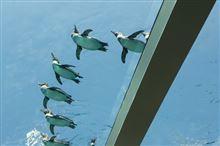 ペンギンが飛ぶ!?…家族サービス…その2