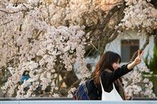 春到来。 郷之谷川