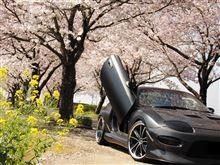 春ですね。ウプ+.(・∀・)゚+