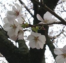 春でございます