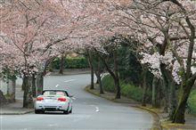 伊豆ドライブ(SAKURAの中をオープンで)