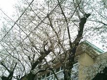 桜咲いて来月から新しい職場