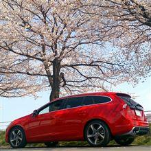 ポカポカ陽気と満開の桜