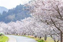 我が町の春^^