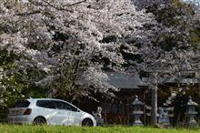 神社と桜と・・・。