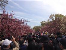 造幣局の桜の通り抜けとあべのハルカス(本当は大阪出張)