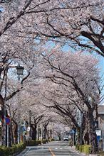 桜のトンネル (Version 2)