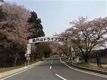 桜、最後かな、今日・・・