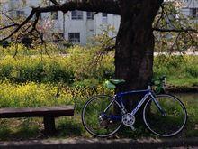 久々に自転車