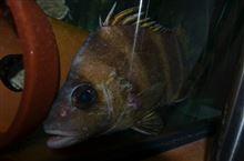 魚の棚で活魚を