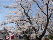 桜満開のお祭りへ!ってプチオフ?(笑)