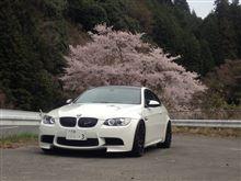 思いがけず桜
