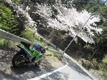 R411奥多摩桜ソロツーリング