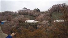 津山城さくらまつり