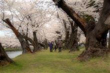 山形へ桜ドライブ♪