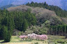 いまふたたびの奈良へ(桜ドライブ遠征編)
