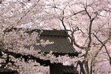 高遠の桜と花咲かじいさん(桜ドライブ遠征編その2)