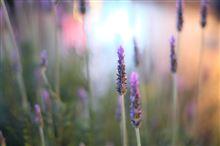 Umeda Flowers