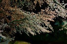 夜桜とアクセラ