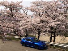 桜だぁ~~~