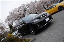 松本の桜とエクストレイル
