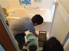 メダカの水槽の掃除