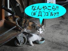 理不尽すぎるー!! (;´Д`)