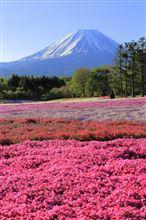 富士と芝桜&新緑の白糸の滝