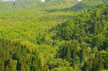 新緑の大山