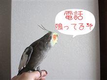 【足まで】一台アガリ!【届け】