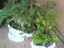 スロースタートな家庭菜園!?