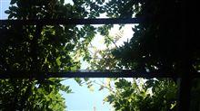 ただ今,昼休み中@いつもの空…。クルマで「花子とアン」を見ながらおにぎりを食べ,お気に入りのベンチでマタ~リとしてます♪木漏れ日と微風が気持ちイイのです。(^∀^)